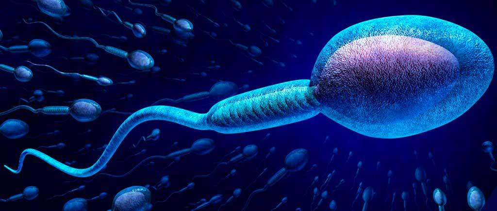 Como mejorar la calidad del esperma