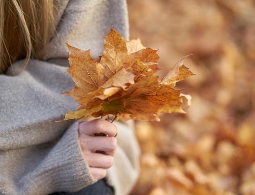 Final del otoño: Mejor época del año para concebir