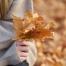 Probablidades de concebir en otoño